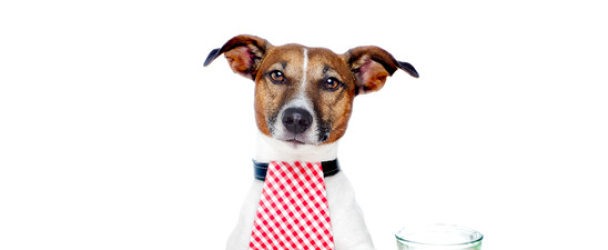 How to Stop Fussy Dog Eating!