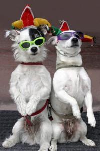 Cool Dog Tricks
