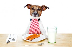 Stop Fussy Dog Eating!